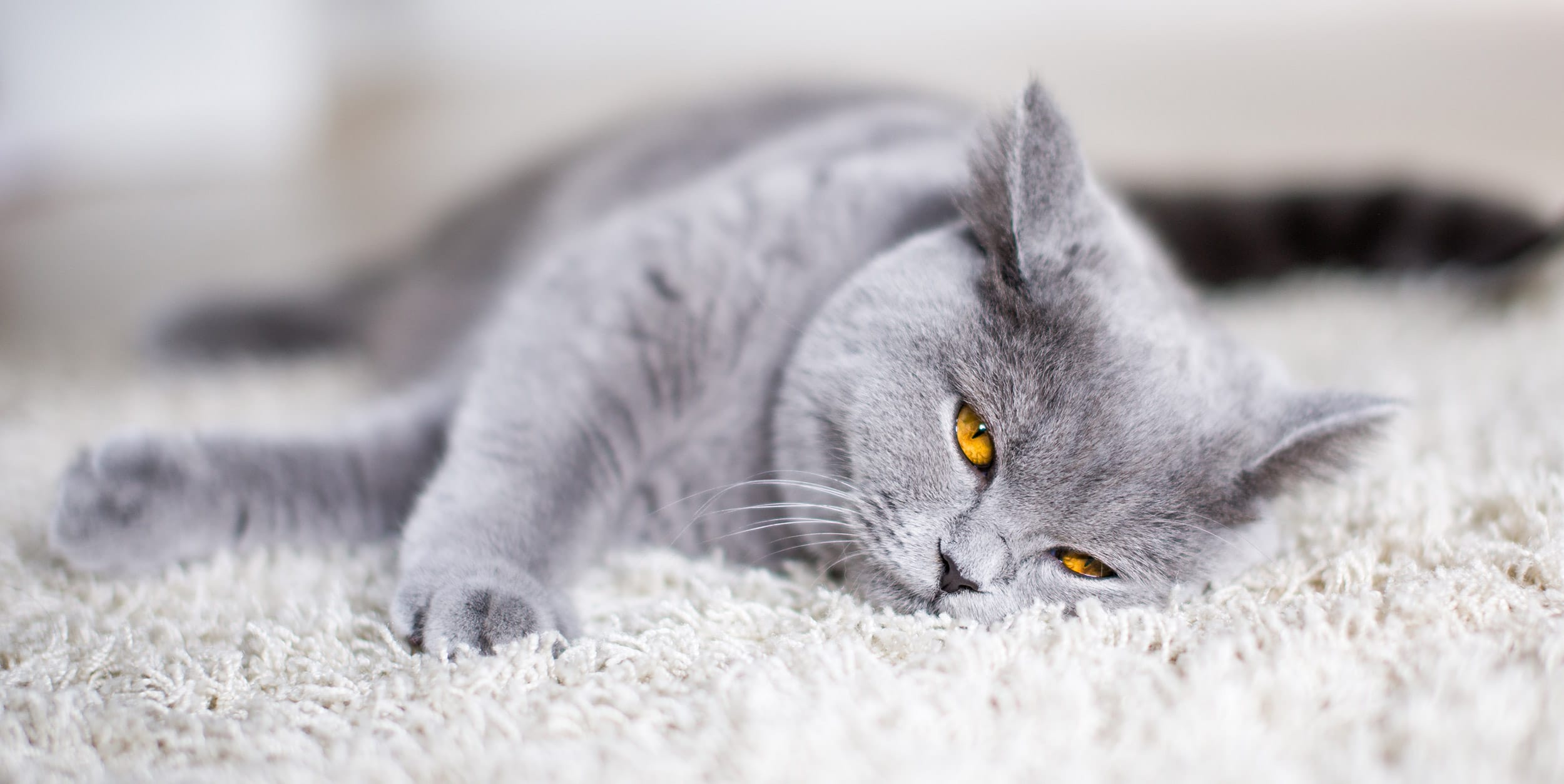 Best Cat Food For British Shorthairs 2018