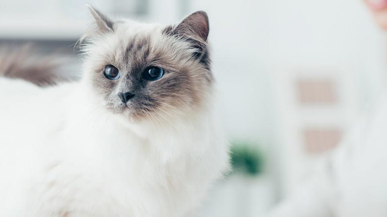 Names for Girl Cats , 100 Purrfect Names for Your Female