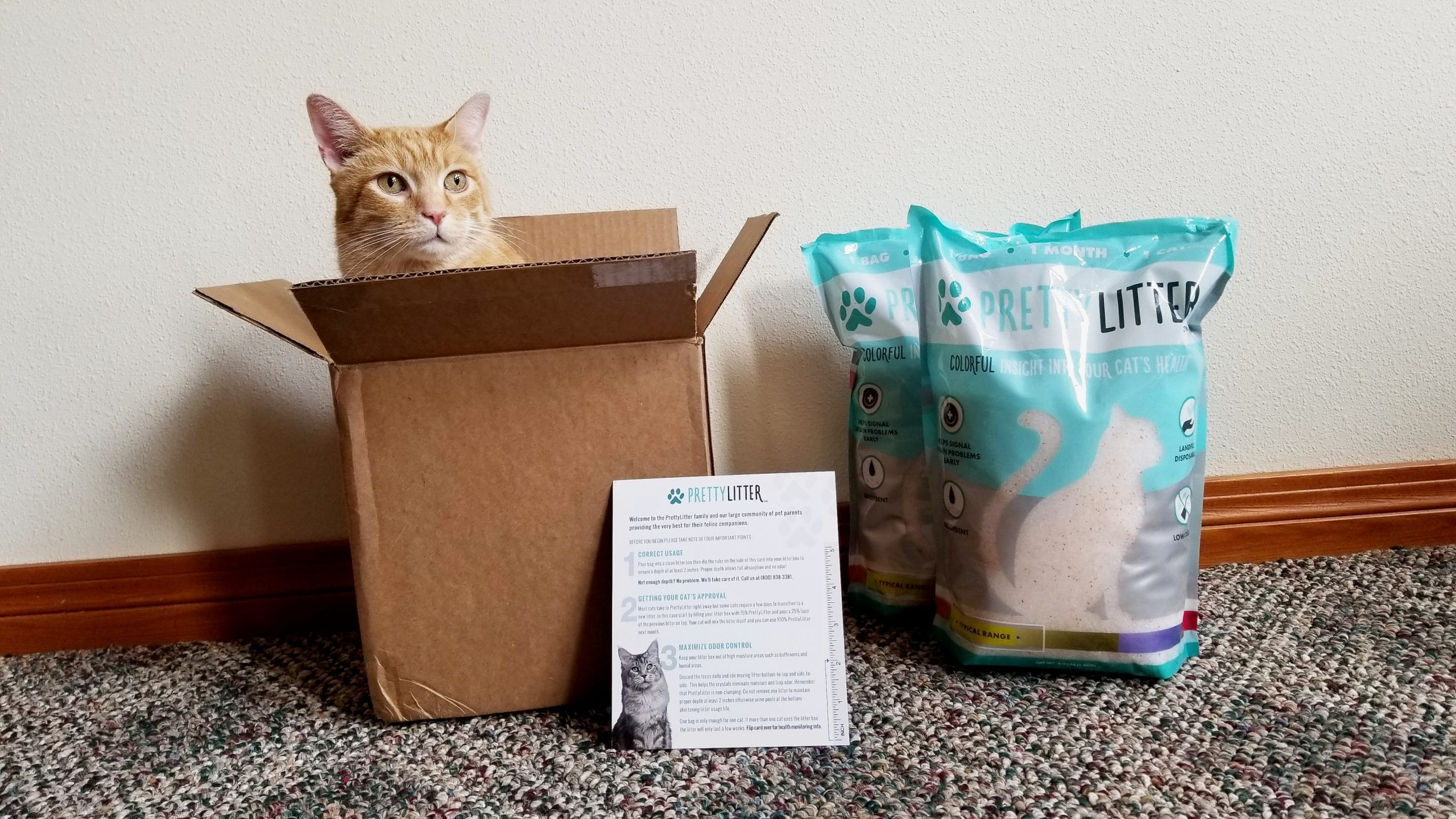 Pretty Litter Review - We Tried This Subscription Cat Litter for 2